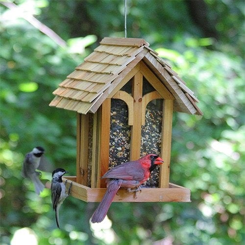Perky-Pet Mountain Chapel Bird Feeder Review