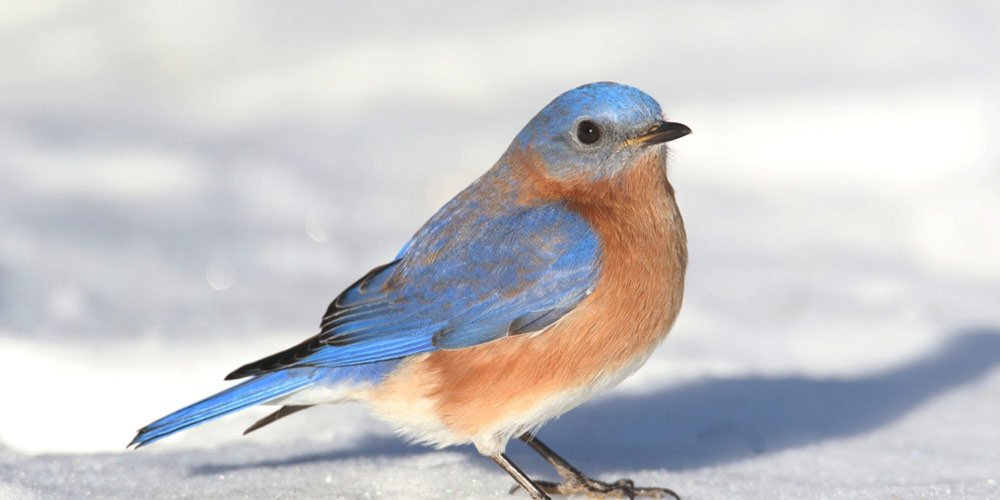 best bluebird feeders