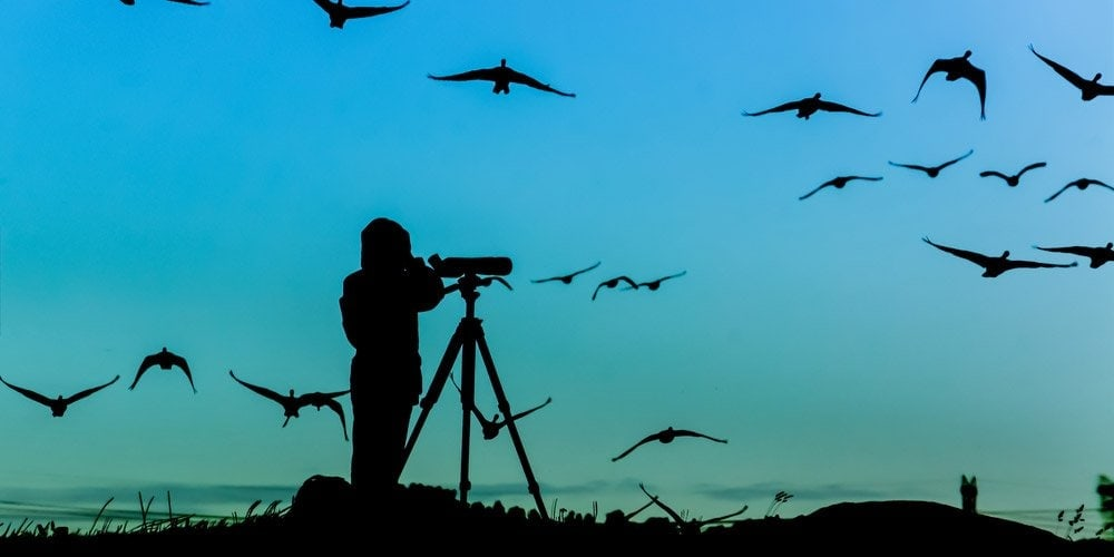 Man birdwatching with a spotting scope