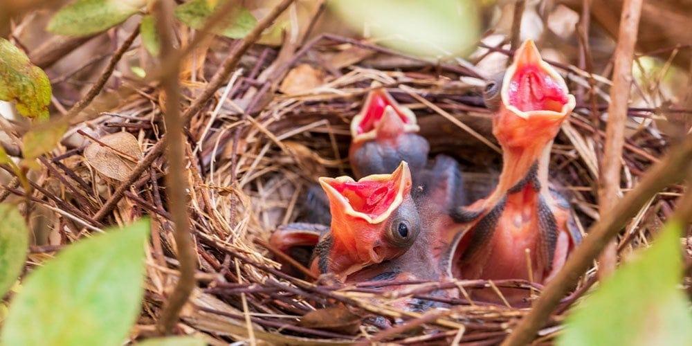 best cardinal birdhouses