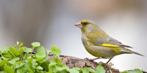 finch in nature - loking for the best finch birdhouses