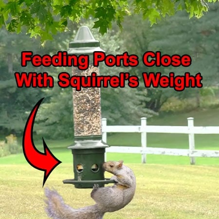 Squirrel Buster Plus Squirrel-proof Feeder