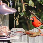 how long does it take for birds to find a bird feeder