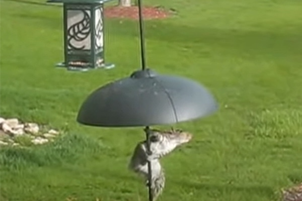 how to keep squirrels away from bird feeders with a dome baffle