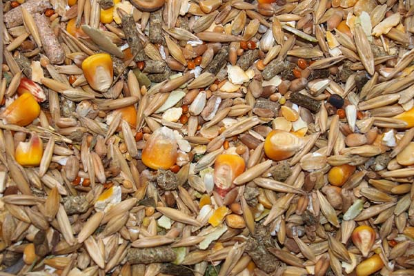 image of bird seed used for making bird seed ornament