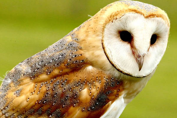 image of an owl during the daytime