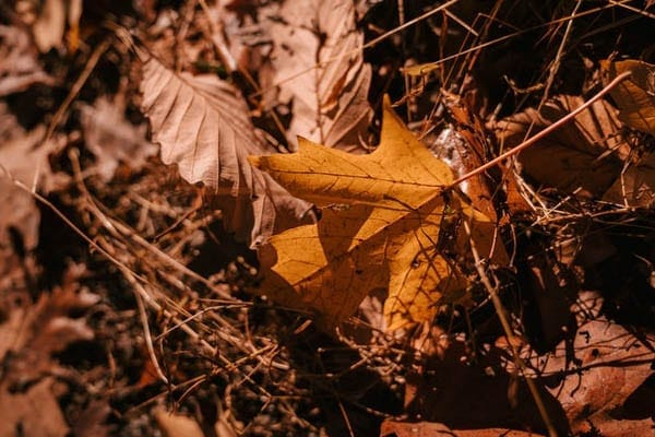 leaf pile to attract rodents and owls