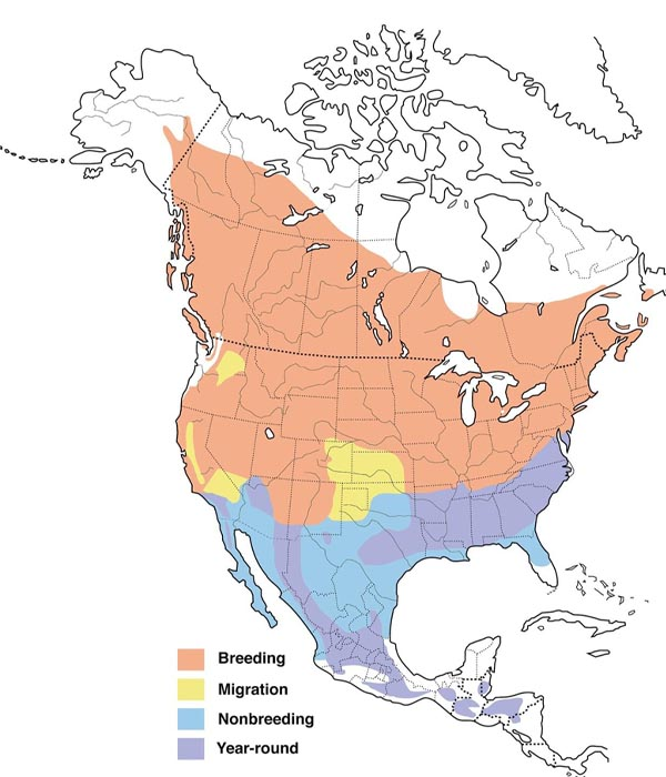 Chipping Sparrow map