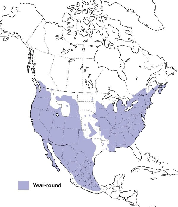 House Finch map