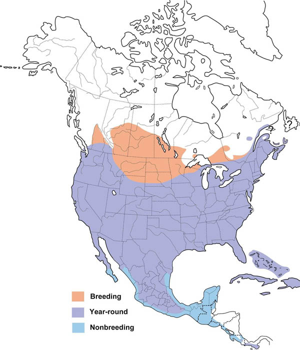 Mourning Dove map