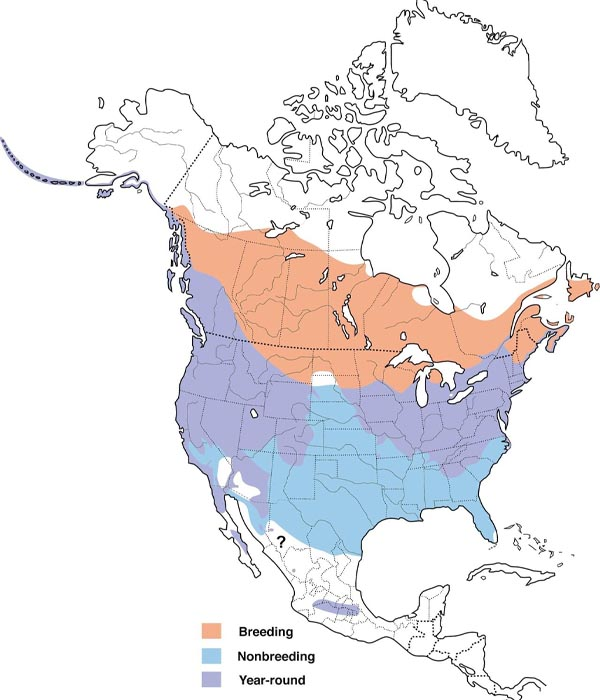 Song Sparrow map