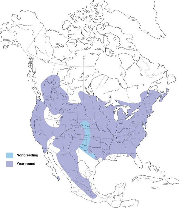 White-breasted Nuthatch map