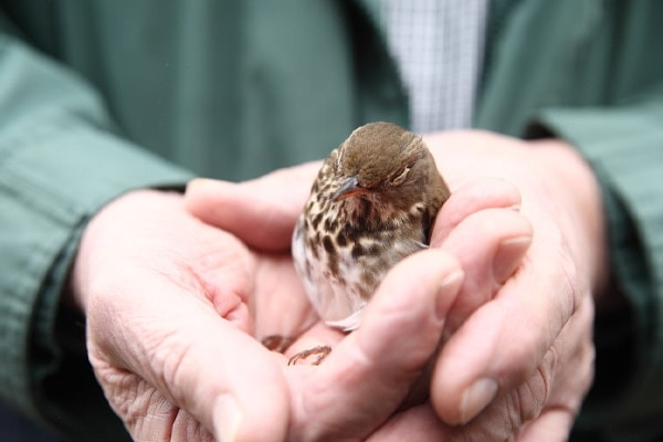 recovering bird after hitting glass pane